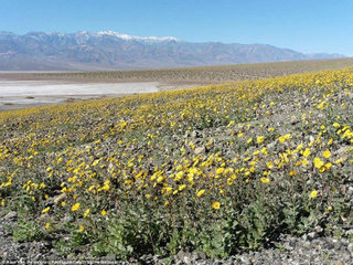 death-valley-bloom-1.jpg